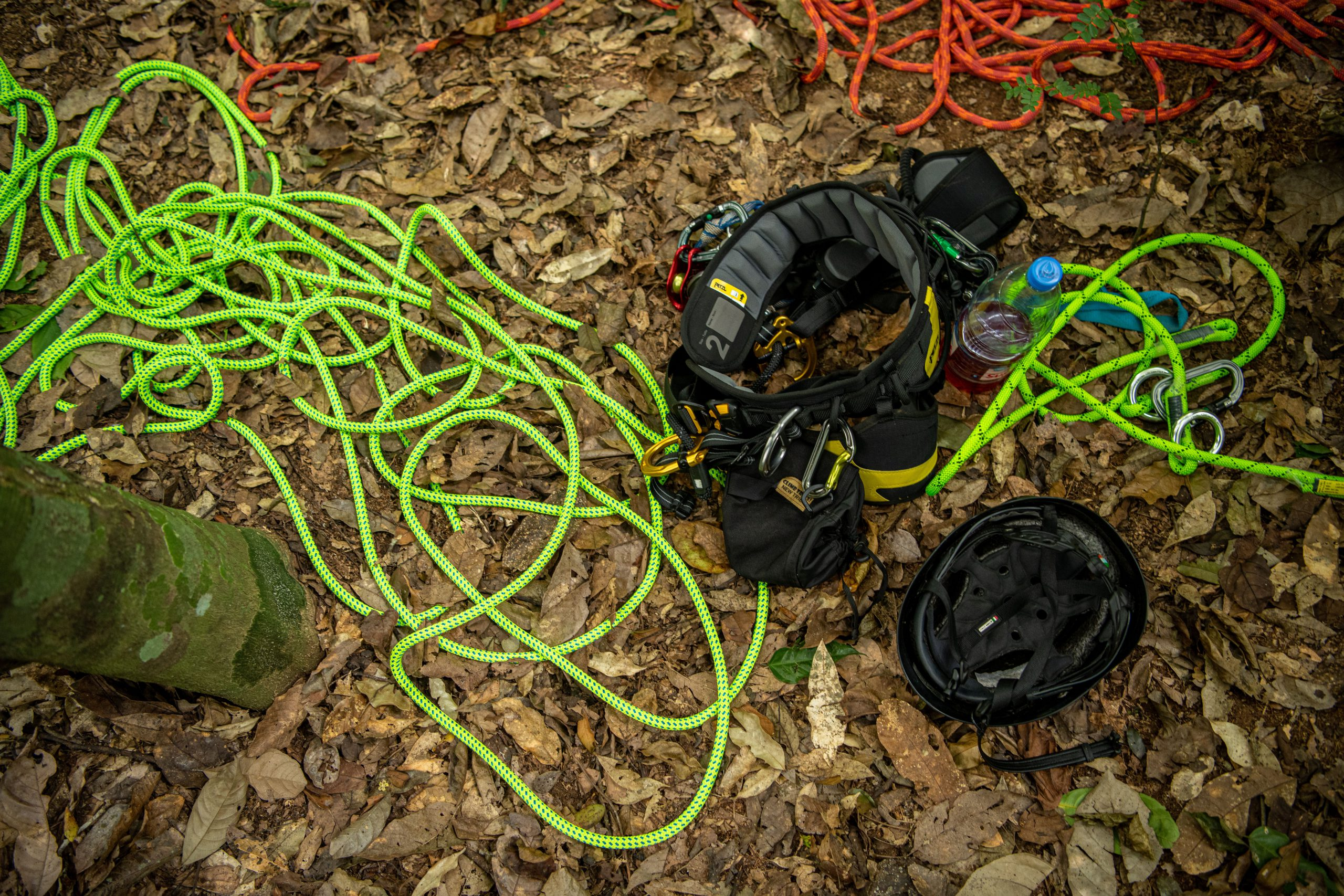 Climbing equipment for deployment in the Cameroonian forest